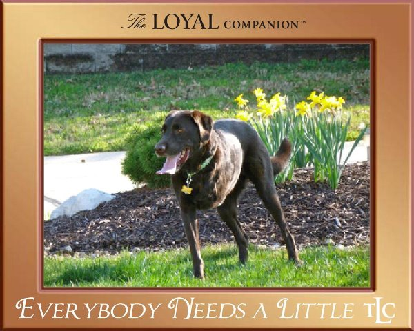 Charley-TLC The Loyal Companion