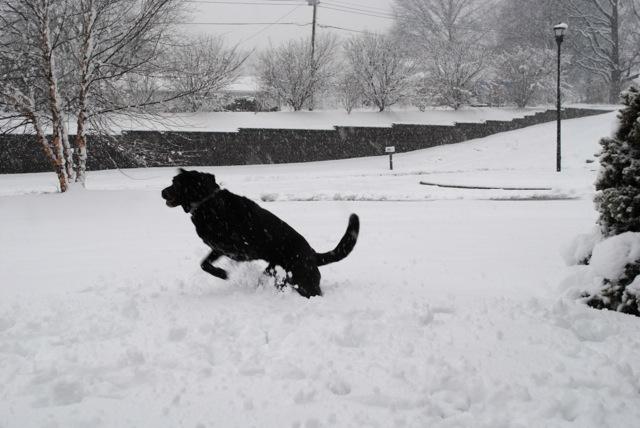 Charley snow