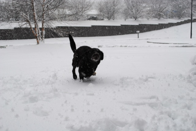 Charley snow1