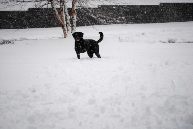 Charley snow3