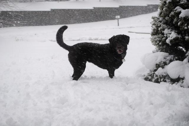 Charley snow4