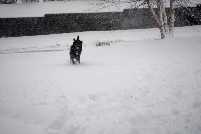 Charley snow5
