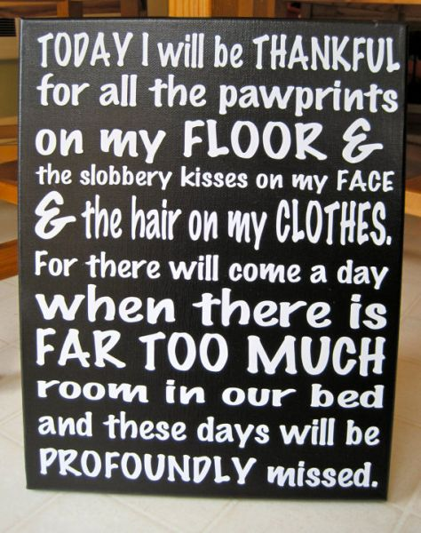 Today I will be Thankful for all the pawprints