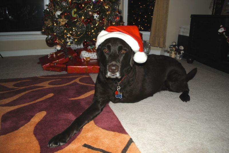 Charley Santa hat m